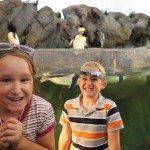 St. Louis Zoo – Lions, Tigers, & Bears!