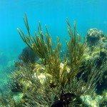 Snorkeling Trunk Bay