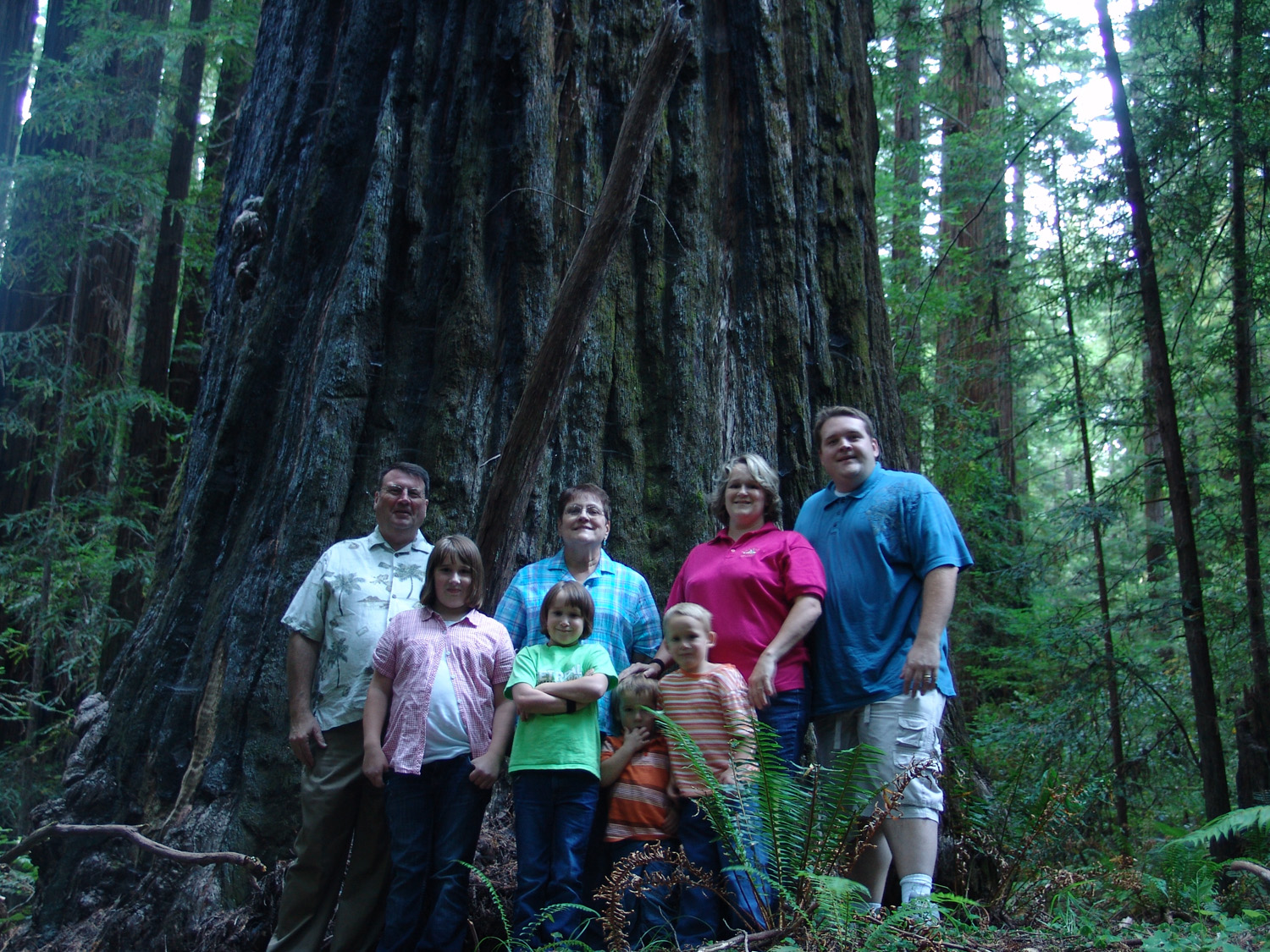Redwood Forest – Majestic Forest