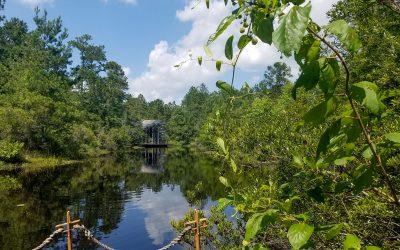 Crosby Arboretum